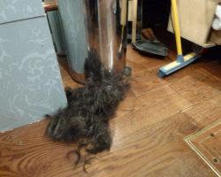 £1000 worth of hair