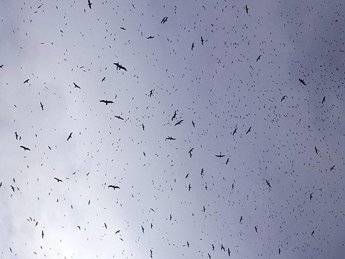 The birds of Gibraltar