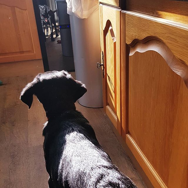 With a volley of barks, #larrybstanding warns us of the return of the (admittedly, handsome) spectral hound who lives in the wine fridge.