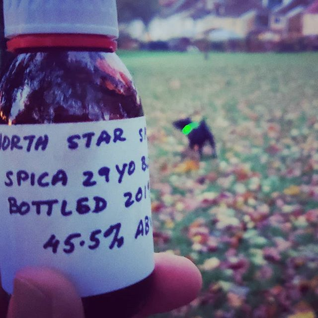 On a grey, snotty, grizzly evening when you've got to take the hound for an amble, I thoroughly recommend packing something like a delicious 29 year old blended whisky such as this one from @northstarspirits – cos why should #larrybstanding be the only one having fun?