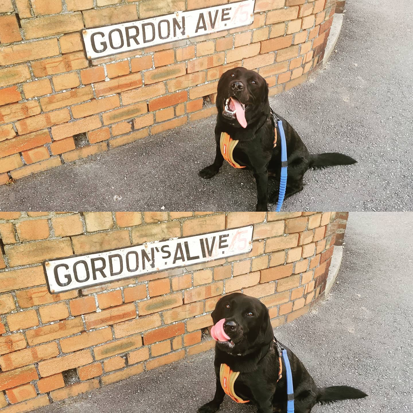 Anyone know where to get custom street name signs made up? While out walking with #larrybstanding the other night he pointed out the one at the top of our road could easily be made 1000% more awesome. #cleverdog #divehawkmen #blessed